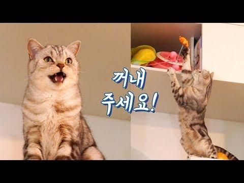 집사와 말로 대화가 가능해진 고양이!  천재냥?!