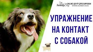 Как подружиться с собакой? Упражнение на контакт с собакой