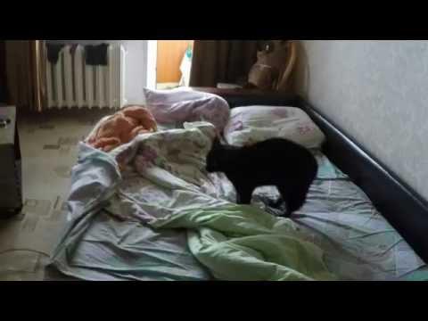 Кошка охренела от залетевшего в квартиру голубя