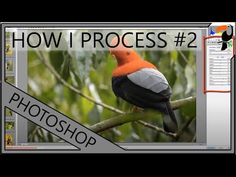 How I Process My Bird Photos - Part 2: Adobe Camera RAW