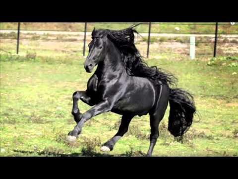 Le plus beau cheval du monde youtube Les plus beaux hommes du monde