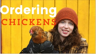 Ordering Chickens for Your Homestead Online