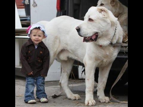 Большие собаки  Фото собак   Породы собак