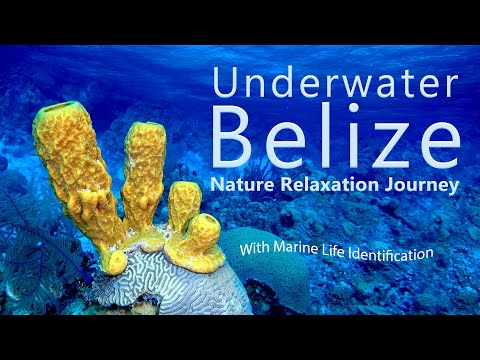 Underwater Belize Nature Relaxation - Scuba Diving Belize - Marine Life Identification