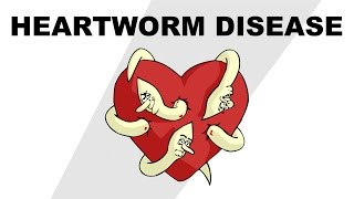 Heartworm Disease - Plain and Simple