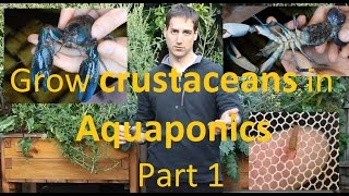 Grow crustaceans in Aquaponics Part 1