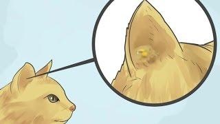 Appliquer une pommade contre la gale d'oreille