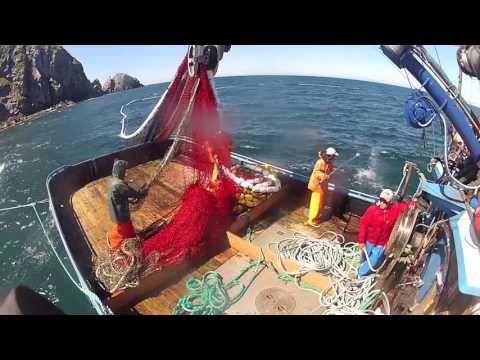 New Dawn 2014 Salmon Fishing Kodiak, AK