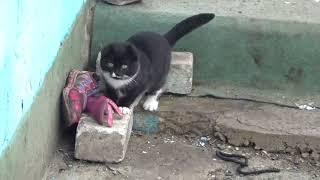 Смешной котенок видео смотреть онлайн бесплатно