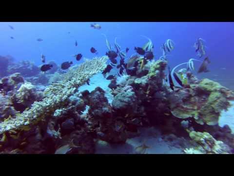 "Dive in Jordan, Aqaba: ""Coral Garden"" 13.09.2013"