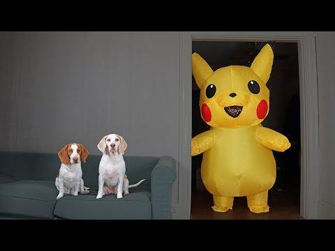 Dogs vs Pokemon Prank: Giant Pikachu Pranks Funny Dogs Maymo & Potpie