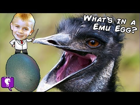 Whats In a Huge Green Emu Egg? Not what you Think by HobbyKidsTV