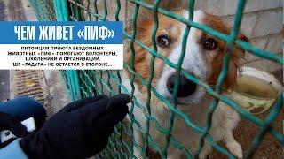 ЧЕМ ЖИВЕТ ПРИЮТ «ПИФ» | Собакам нужна любая помощь