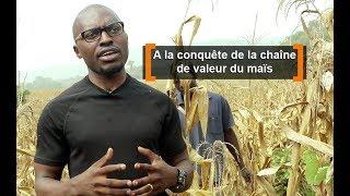 Cameroun : A la conquête de la chaine de valeur maïs