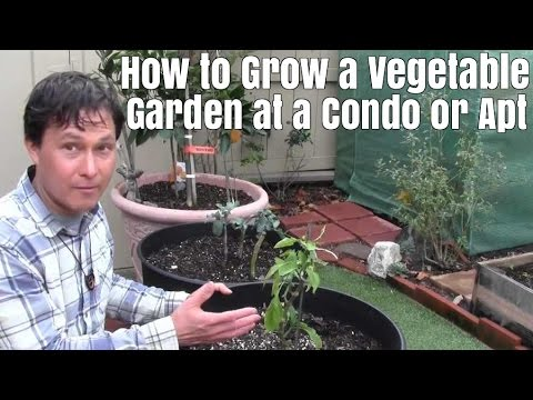 allotment ideas for beginners EF BF BD tips for grow your own newbies 3