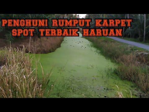 Casting Haruan | Spot Karpet