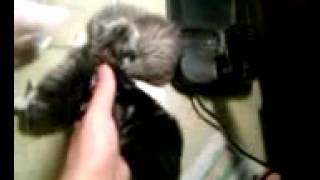小貓嚇到了尖叫 噗哧的笑了