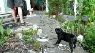 Lilli und der Laubsauger
