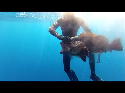 Sperfishing in North Africa (ALGERIA)-GoPro