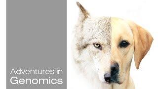 Dog Genetics in Health and Disease - Adventures in Genomics