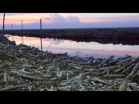CNN Explains: Deforestation