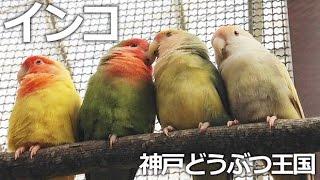神戸市中央区『神戸どうぶつ王国』 可愛いインコに囲まれるコンタクトパ...