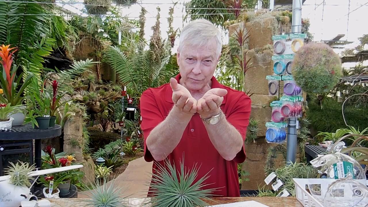Paul Isley Rainforest Flora Ask Mr Tillandsia 2 Youtube
