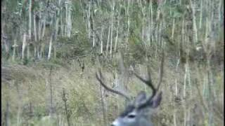 Yosemite National Park: Call of the Coyotes