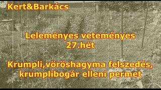 Kert&Barkács - Leleményes veteményes -27.hét-Krumplibogár permetezés,hagyma felszedés
