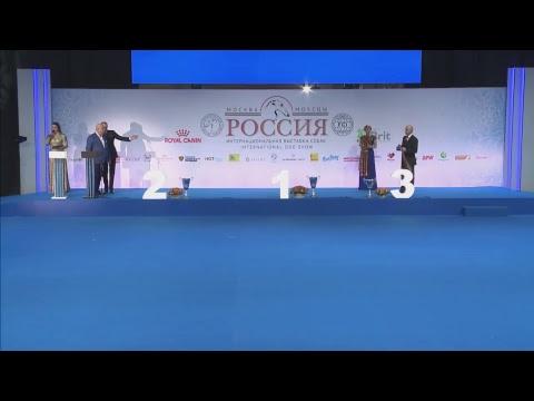 Интернациональная выставка собак Россия-2018. 3 ноября