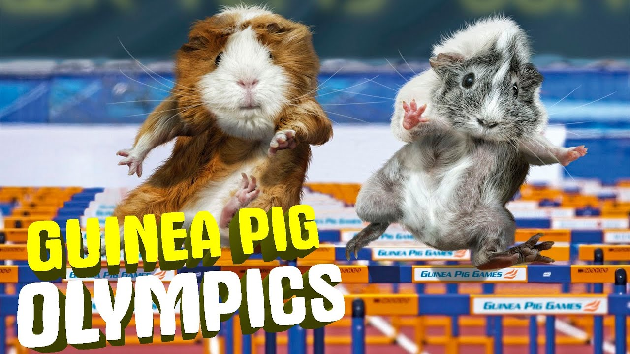 Osu 3 38 Guinea Pig Olympics Maik Mal Youtube