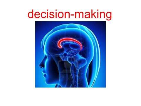 Cingulate-Hippocampus Coordination Regulates Choice Coding