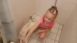 Как мыть собаку дома, как купать чихуахуа | Чихуахуа и ребенок | Девочка моет собаку | Chihuahua