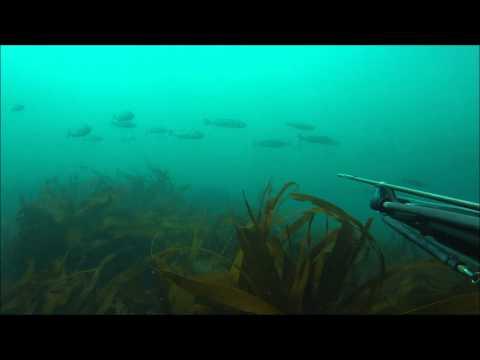 Spearfishing Cornwall