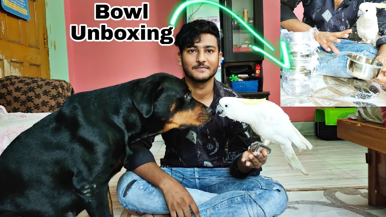 Purchase bowl set for exotic colourfull  bird's|| un boxing with poly & mango.
