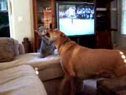 Dakota & Tuna, 'Dog-Cat Fight' Funny