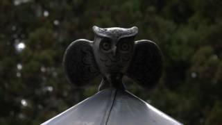 フクロウのバリエーション豊かな声を集めてみました。