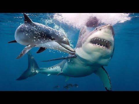Почему Акулы Боятся Дельфинов