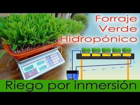 FORRAJE VERDE HIDROPÓNICO RIEGO POR INMERSIÓN (ahorro inicial)