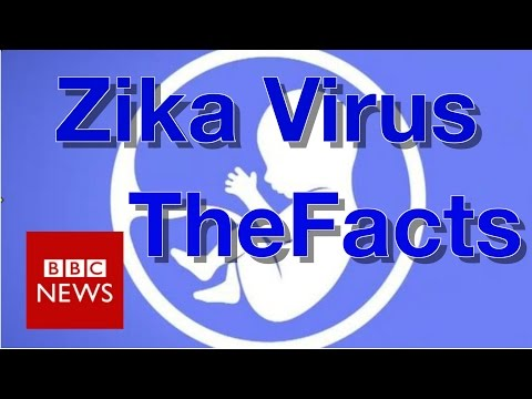 Zika virus: What you need to know BBC News
