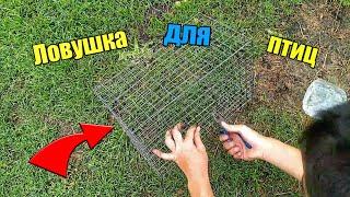 Как сделать ловушку для птиц Автоматическая ловушка для птиц