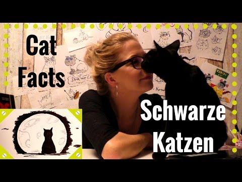 Cat Facts - Folge 7: Schwarze Katzen