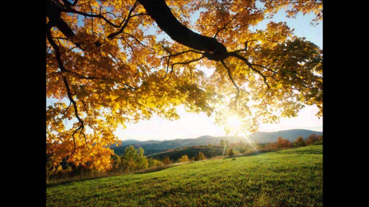 Fall Of The Autumn Hd Wallpaper Gerson Rufino Dia De Sol Wmv Youtube