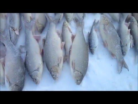 Зимняя рыбалка проверка