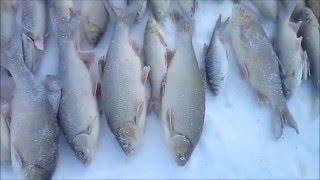 Зимова риболовля перевірка спідниці