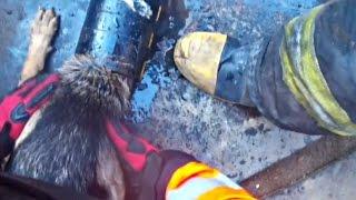 Пожарные спасли собаку, голова которой застряла в стальной трубе (новости)