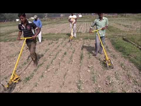 Mechanical Weeding by CRIJAF Nail Weeder in Wheat