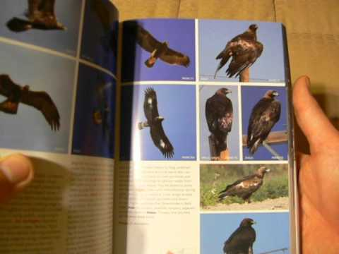 The Stokes Field Guide To The Birds Of North America (Review/Flip-thru)