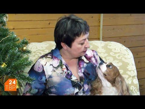 Собака без недостатков кавалер-кинг-чарльз-спаниель | Элита | Сергиев Посад