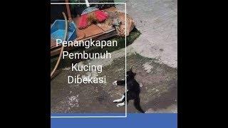 Gambar cover Pria Pemukul Kucing Sampai Mati || Digiring Dikantor Polisi Bekasi Kota